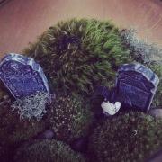 Image: Graveyard Terrarium Close Up by Amoret