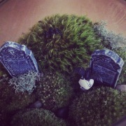 Image: Graveyard Terrarium Close Up by Amoret