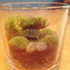 Image: Tiny Turtle Terrarium in a Candle Jar by Amoret