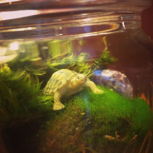 Image: Turtle Terrarium Close Up by Amoret