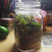 Image: Turtle Terrarium in Ball Jar Container by Amoret